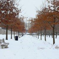 Зима :: Galina Kazakova