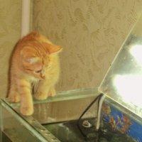 Ух ты, рыбы сколько! Перезимуем! :: Ольга Кривых