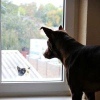 Отношения между кошкой и псом:) :: Алина Чуркина