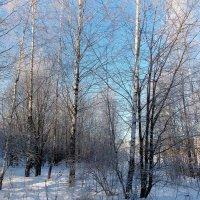 Вот и пришла зима морозная -20 :: Irina
