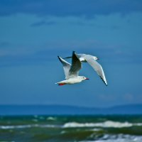 чайки :: Юрий Кацев