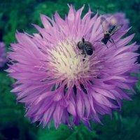 пчелки :: Виктория Обрывченко