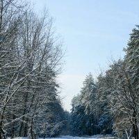 Январь :: Vitalik Babich