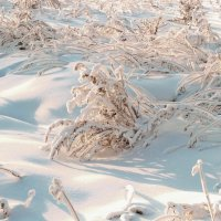 Зимние травы. :: Валентина Налетова