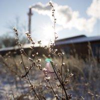 Морозный день :: Vadim Papko