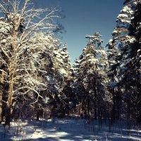 В лесу :: Viacheslav Birukov