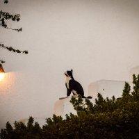 Одинокая кошка :: Наталья Елгина