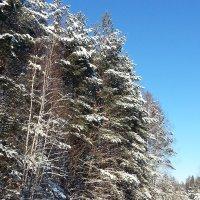 Зимний лес :: Александр Арсеньев