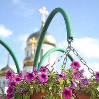 Цвет :: Анастасия Высоцкая