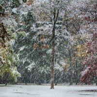 Из прошлых зим - снегопад :: Яков Геллер
