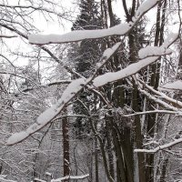 Пучок дерев. :: Алексей Сараев
