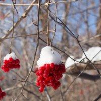 Припорошенная снегом:) :: Тамара Морозова