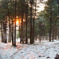 Солнце перед закатом в лесу :: Тамара Морозова
