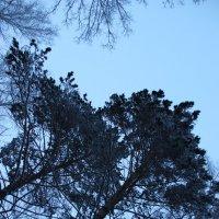 лес :: Роман Овечкин