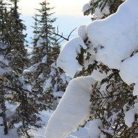 зимний лес :: Леся ...