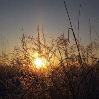в лучах восходящего солнца :: svetlana