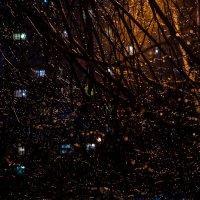 Дождь на Старый Новый Год :: Илья Шипилов