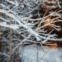 Зимняя красота :: Ksenia Crocker