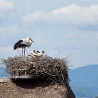 Аст на крыше - мир на земле. :: Sergej Lopatin
