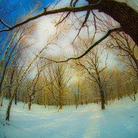 Мороз и солнце :: Игорь Герман