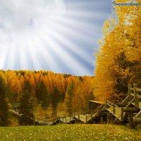Золотая осень :: Оксана Иваненская