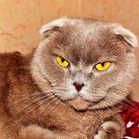 Один знакомый котик :: Сергей F