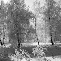 Солнце гуляет по лесу!!! :: Наталья Юрова