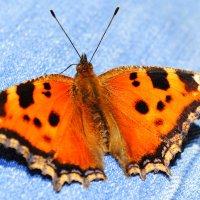 Бабочка :: Яна Данилко