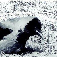 Проворонила б ворона... :: sv.kaschuk