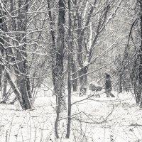 этюд в зимнем парке :: Максим Должанский
