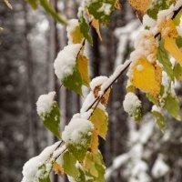 Первый снег :: Александр