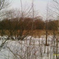 Зима в Серебряном бору :: gor4inka Koryagina
