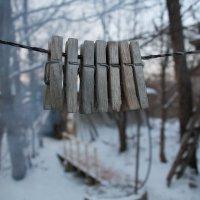 Зимовье прищепок:) :: Тамара Морозова