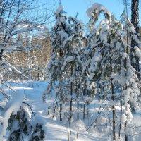 после  снегопада :: Вик Токарев