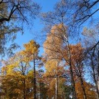 Осень золотая :: Наталия Короткова