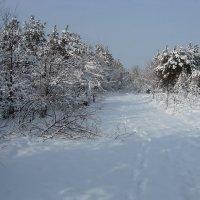 Зима в лесу :: Lara
