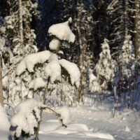 Зимний лес :: Андрей Мирошниченко