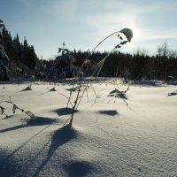 А снег искрится :: Андрей Мирошниченко