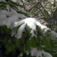 Выпал снежок :: Юрий