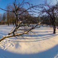 Зимние зарисовки :: Игорь Герман