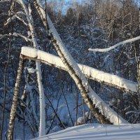 Лес зимой :: Marina Gunbina