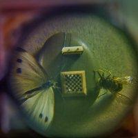 Чудеса под микроскопом :: Marina Gunbina