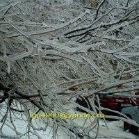 На второй день  после  ледяного  дождя . :: Игорь Пляскин