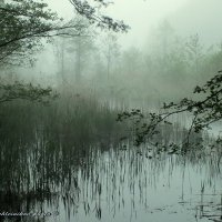 Утро на озере Паильгис. :: Evgenij Schleinikov