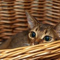 кошка :: Оксана Богачева