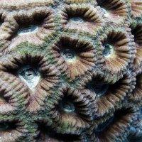 Коралловое разноцветье. :: Марина Трейер