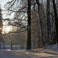 Холодное утро :: Юрий Цыплятников