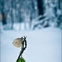 Ледниковый период :: Владимир Щербина