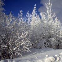мороз :: Олег Петрушов