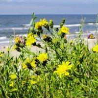 Цветы Балтики :: Evgenij Schleinikov